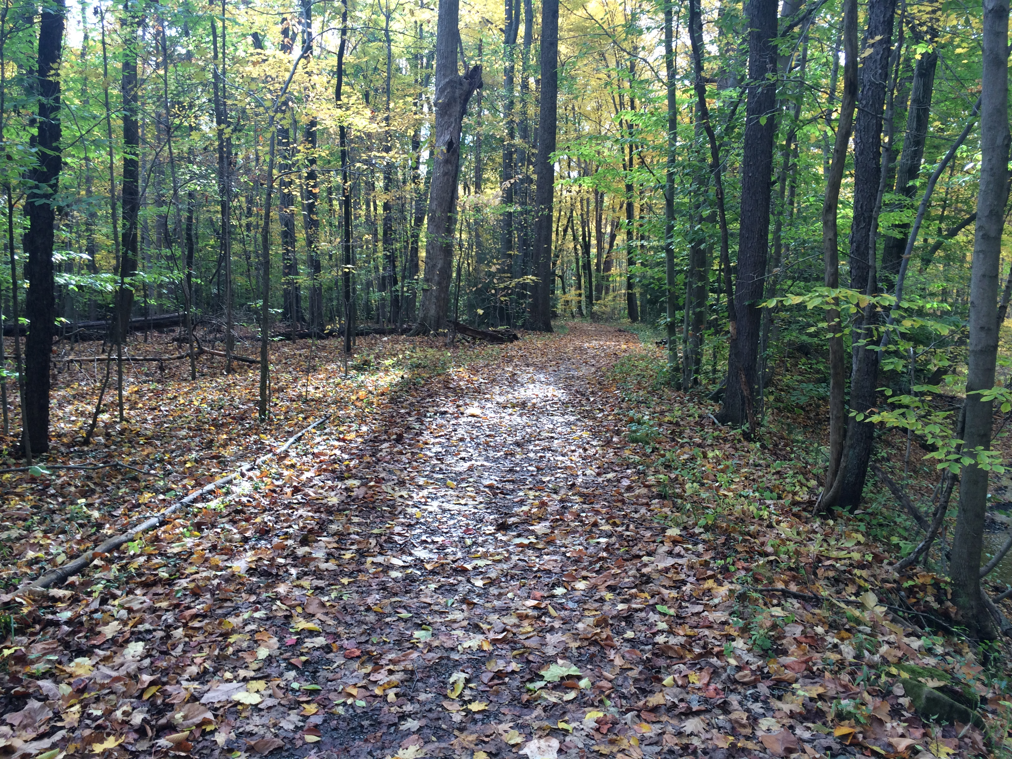 The Casual Runner Mailbag – October Edition
